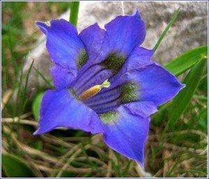 fleurdulac11