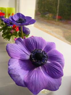 fleursdhiveranemonesl1.jpg