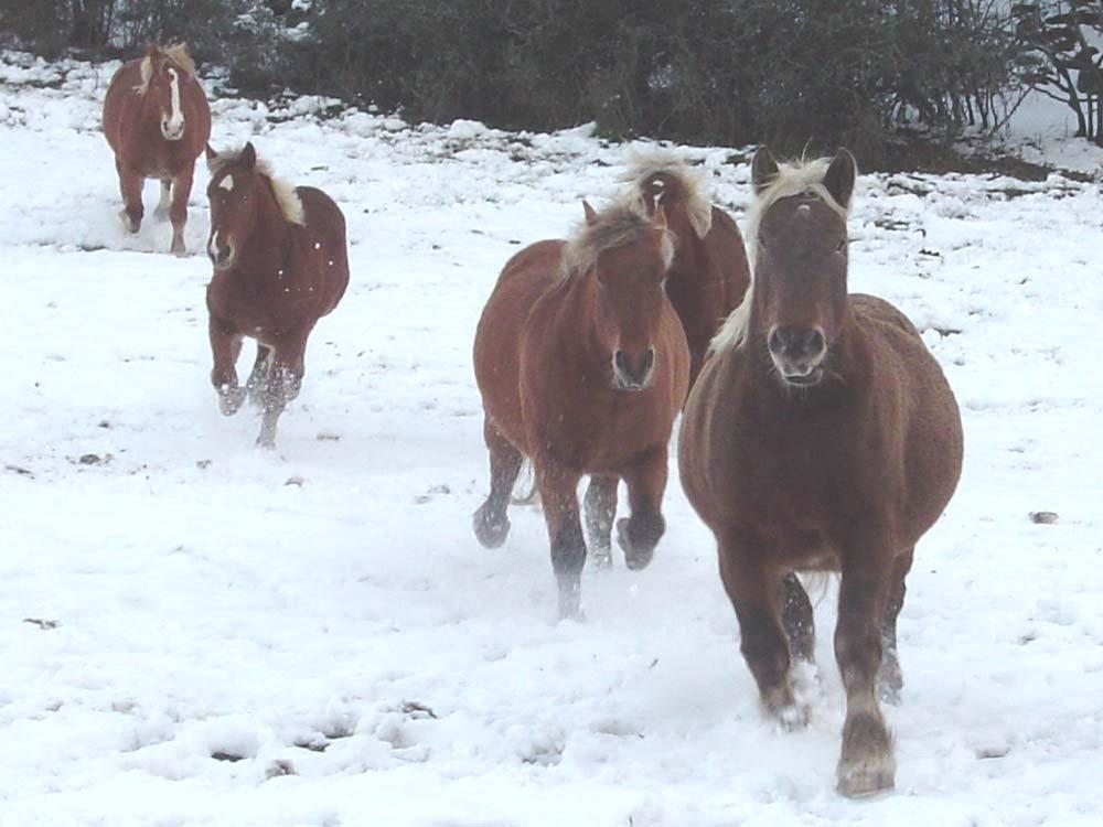 chevaux1.jpg