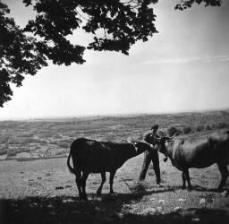 jeune vacher