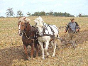 cheval-charrue2-300x225