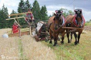 cheval-et-batteuse1-300x199