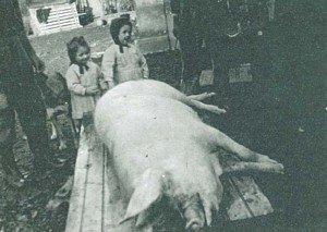 cochon-1951-300x213