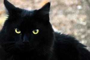chat-noir-300x200