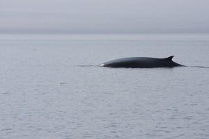 baleines-300x200