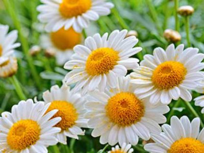 19 quinto jean louis murat et la nature sous toutes - Fleur au coeur noir ...