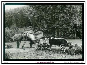 la ferme autrefois 3 foin transport
