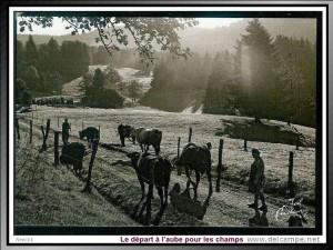 la ferme autrefois 5 départ à l aube pour les champs