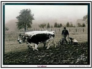 la ferme autrefois 8